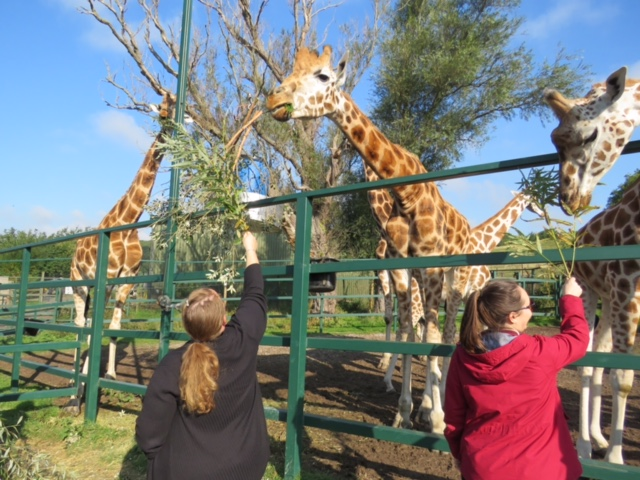 Take a look round the amazing Giraffe Lodge and UK safari experience at Port Lympne Reserve in Kent. An amazing stay for any couple wanting a unique and romantic break.