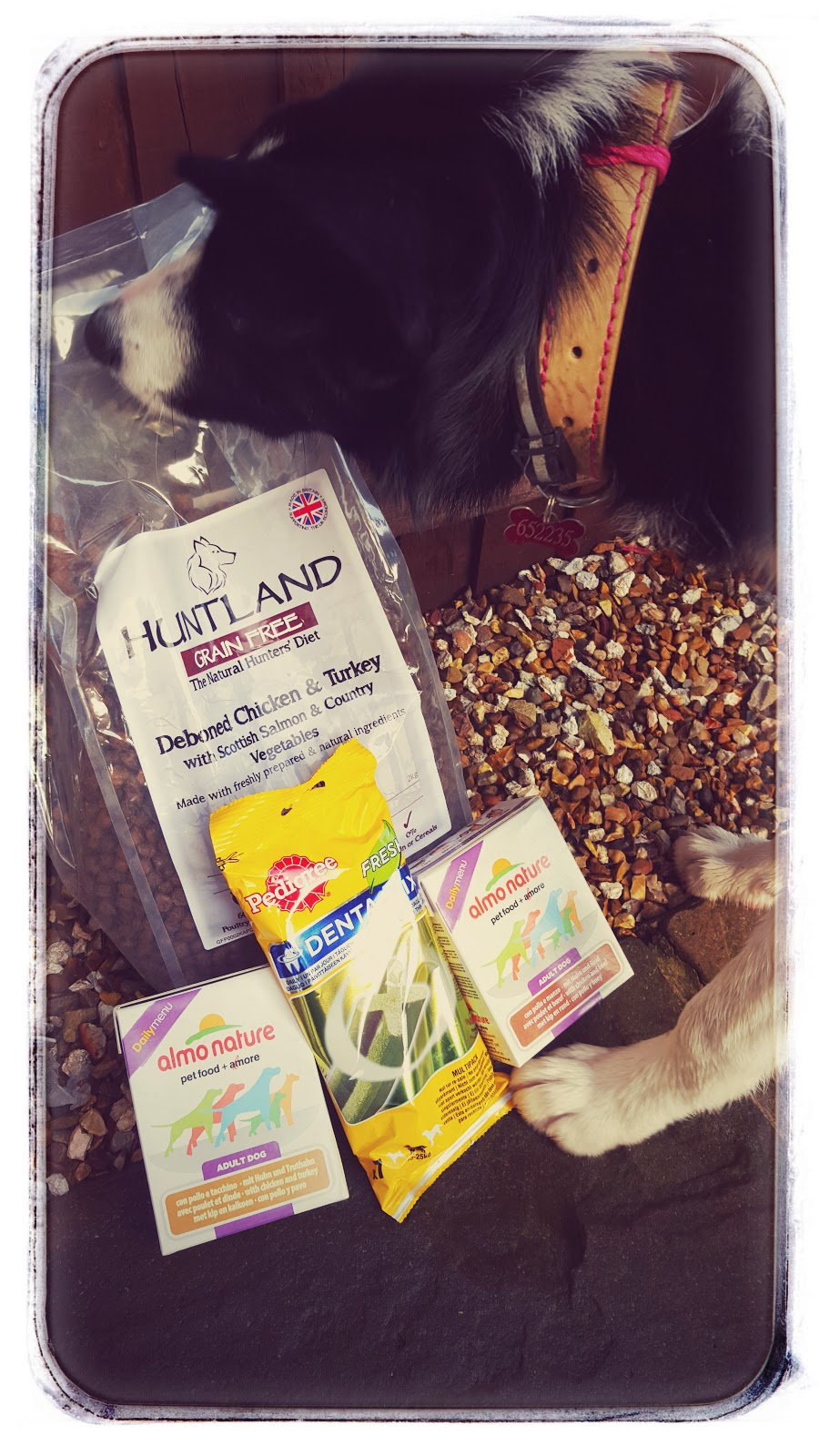 Pet Shop UK: Puppy Food Review For Mollie
