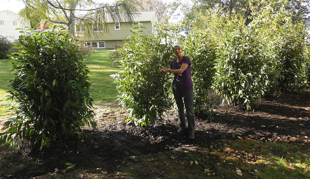 Skip Laurel Hedge Garden Design Ideas