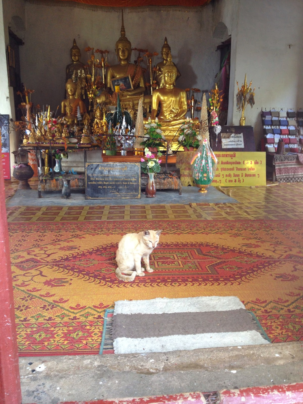 Luang Prabang - Resident cat of one of the temples at the top of Phousi Hill