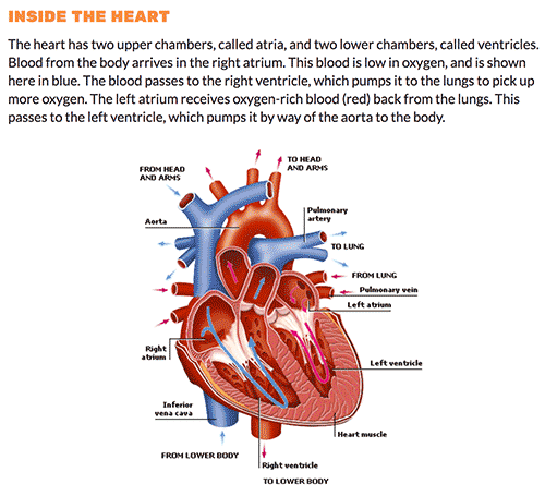 Parts of the circulatory system explanation