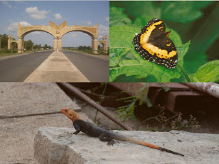 Gallery Butterfly Agama and Hello Yola