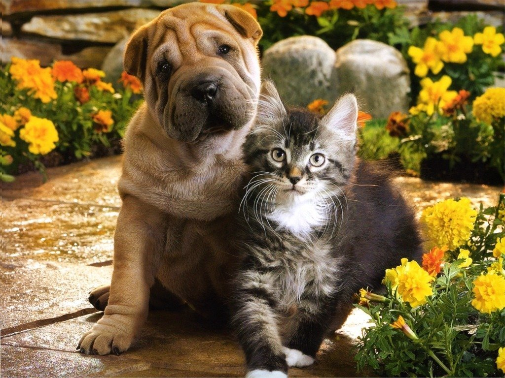 Cute Dogs|Pets: Puppies and Kittens Together Pictures