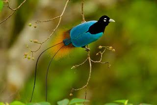 Keindahan Alam Dengan Suara Burung