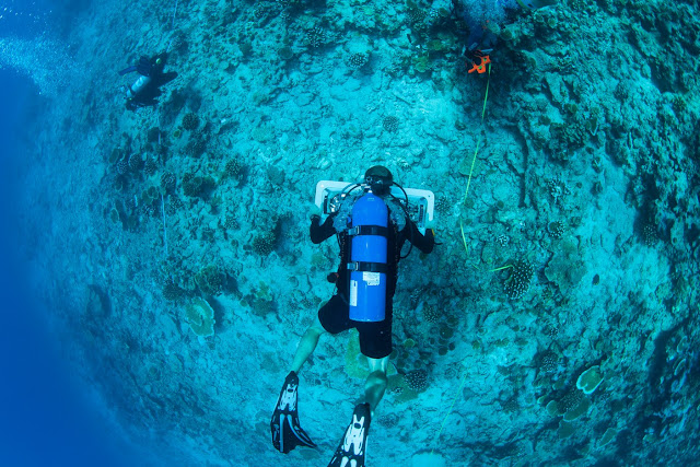 Divers surveying the reef with the photography rig