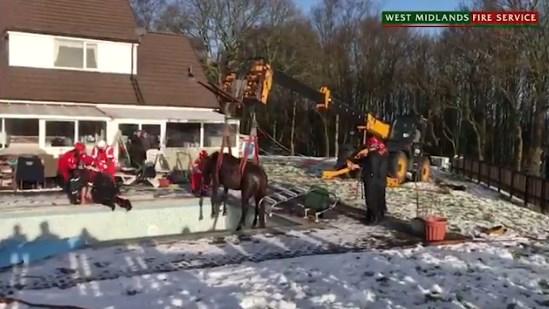 Penyelamatan Kuda Yang Tercebur Ke Kolam Renang Di Inggris