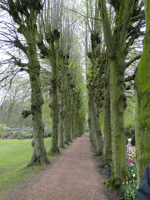 Trees covered in green moss line a pathway in Belgium.