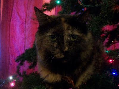 Close up of a cat sitting in a Christmas Tree