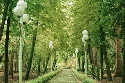 Hutan Kota di Indonesia Yang Populer Buat Ngadem