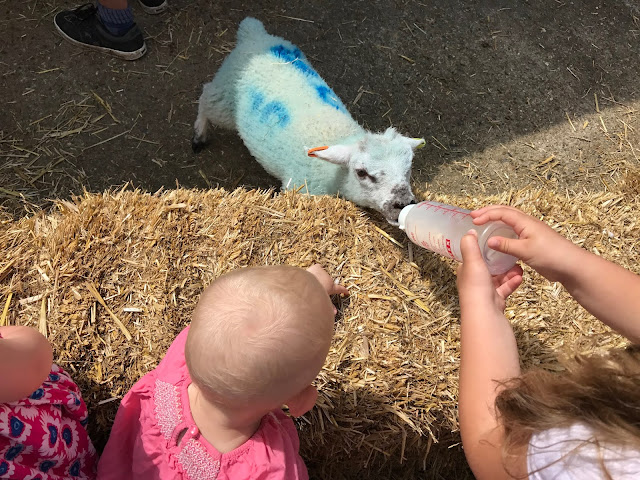 Feeding the lambs in the spring at Lee Valley Park Farms Essex