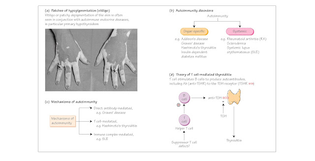 Endocrine autoimmunity, Autoimmunity, Mechanisms of autoimmunity, Direct antibody-mediated disease, T cell-mediated disease, Immune complex-mediated disease, Genetic factors, Endocrine factors