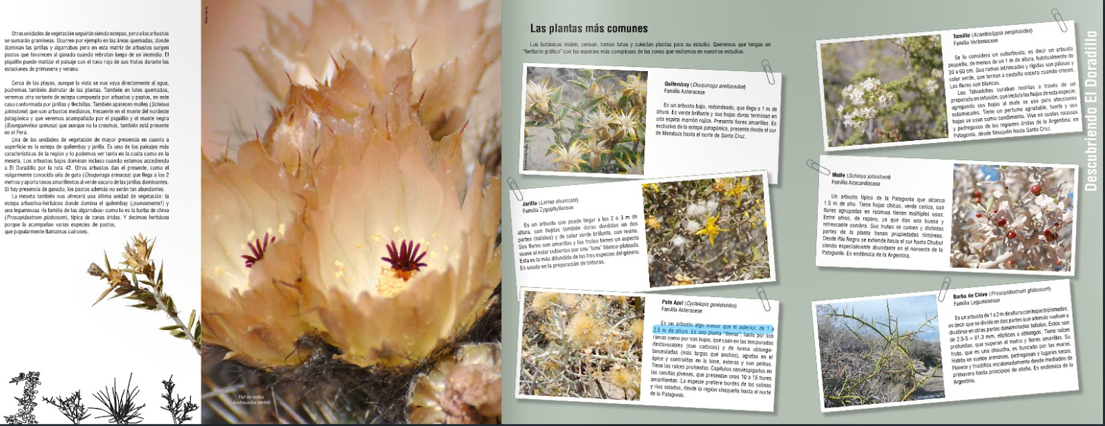 Flora,Fauna,Geografía y mas del Área Natural Protegida El Doradillo