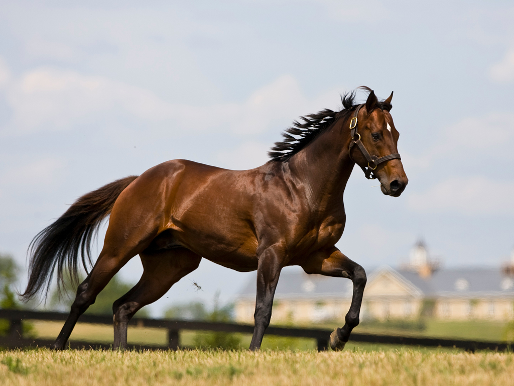 Best   Wallpaper Horse Mustang - Brown-Running-Horse-Free-Wallpaper  Pictures_1653.jpg