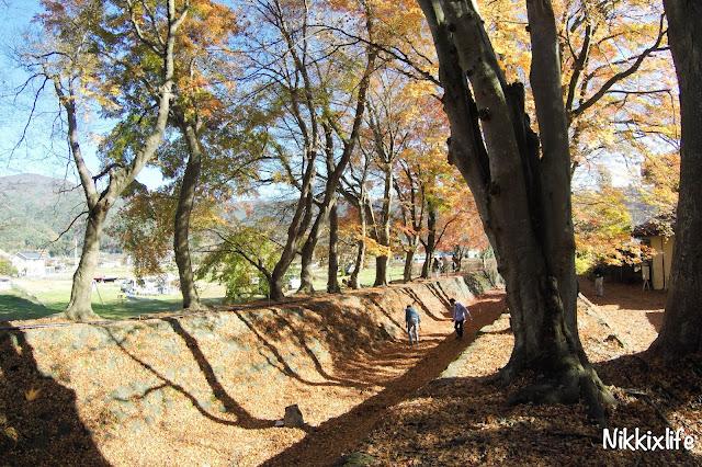 【日本。河口湖】紅葉回廊:觀賞紅葉和富士山的好地點! 5