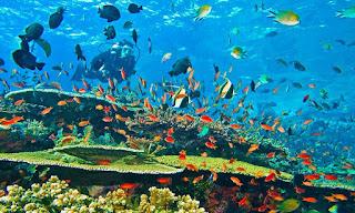 Scuba diving in Kenya along Diani beaches - Diani Marine, Kisite Mpunguti, Mtwapa, Watamu Marine National Park, Barracuda Reef, Malindi Marine Park and Kisite Mpunguti Marine Reserve