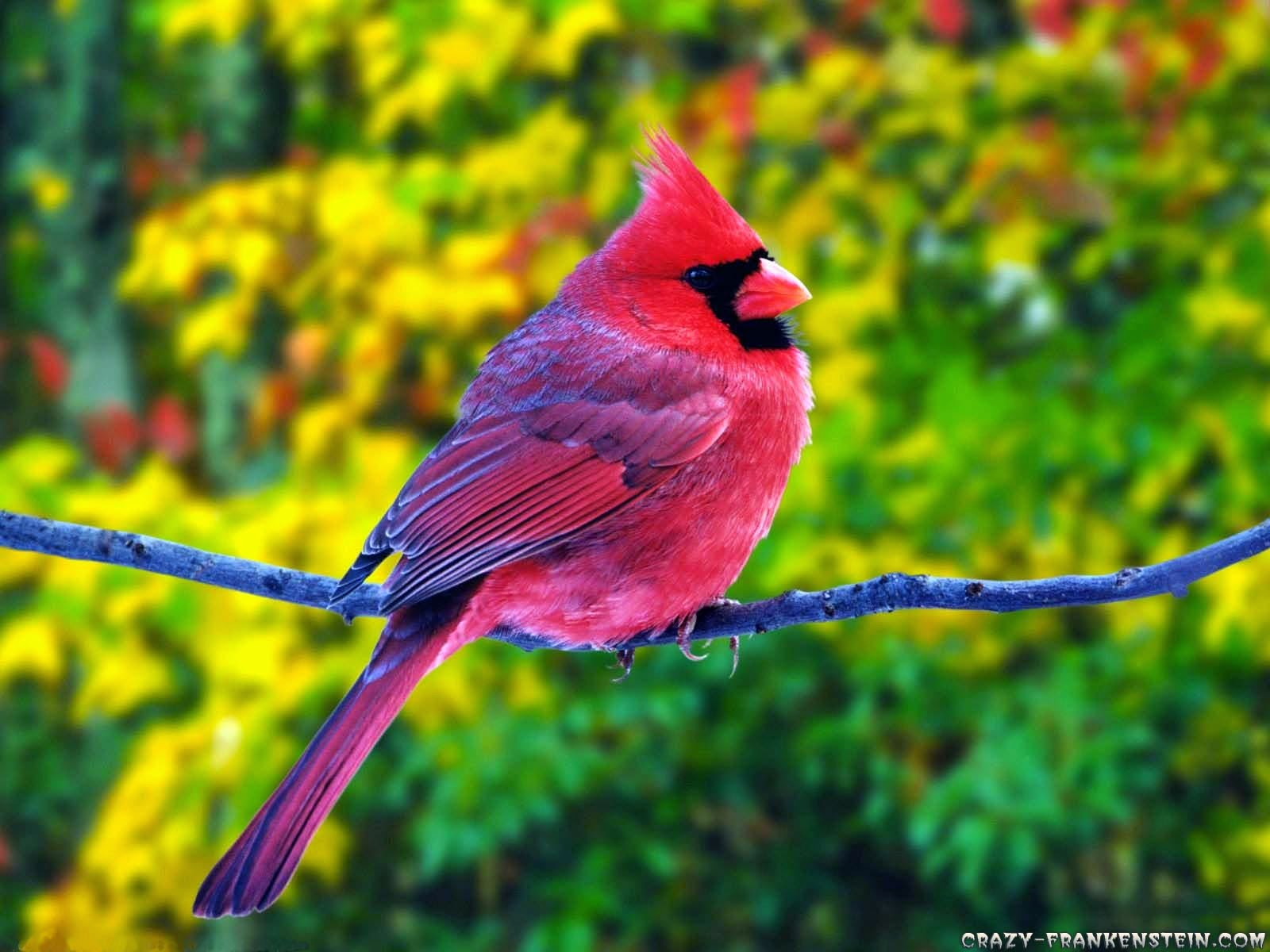 WOW: Download Colorful Birds HD Wallpaper