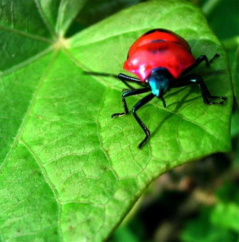 Gambar Serangga  Dunia Binatang
