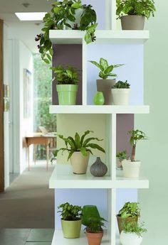 plantas -na -estante