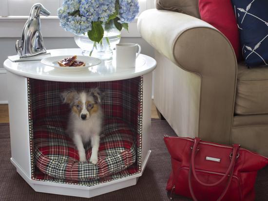 Mesa reciclada para canes