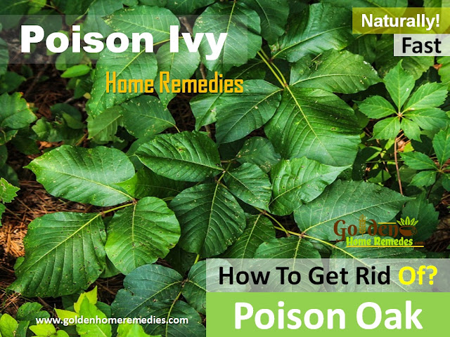 Poison Oak, Poison Ivy, How To Get Rid Of Poison Oak, Home Remedies For Poison Oak, Poison Oak Treatment, Poison Oak Relief, Poison Oak relief fast, How To Treat Poison Oak, Poison Oak Home Remedies, How To Cure Poison Oak, Poison Oak Remedies, Remedies For Poison Oak, Cure Poison Oak, Treatment For Poison Oak, Best Poison Oak Treatment, How To Get Relief From Poison Oak, Relief From Poison Oak, How To Get Rid Of Poison Oak Fast,