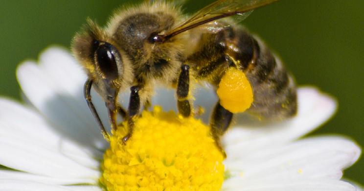 4 h beekeeping essay