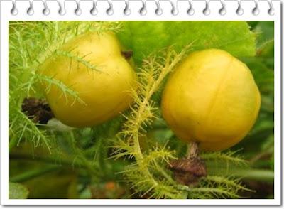 Manfaat buah rambusa untuk kesehatan yang patut kita ketahui