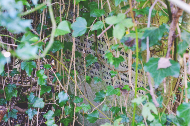 Gravestone hidden by overgrowth