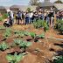 Estudantes estrangeiros visitam produção de orgânicos na Capital