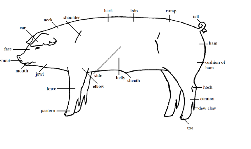 4 h pig diagram chevy 700r4 transmission learning to judge livestock judging programs how swine parts of a same with other animals if you know the it makes easier do your reasons and placings