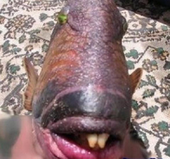AJORBAHMAN'S COLLECTION: Fish with Real Human Teeth