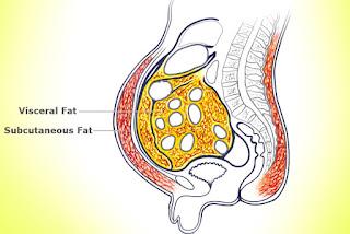lemak siliputi organ penyakit