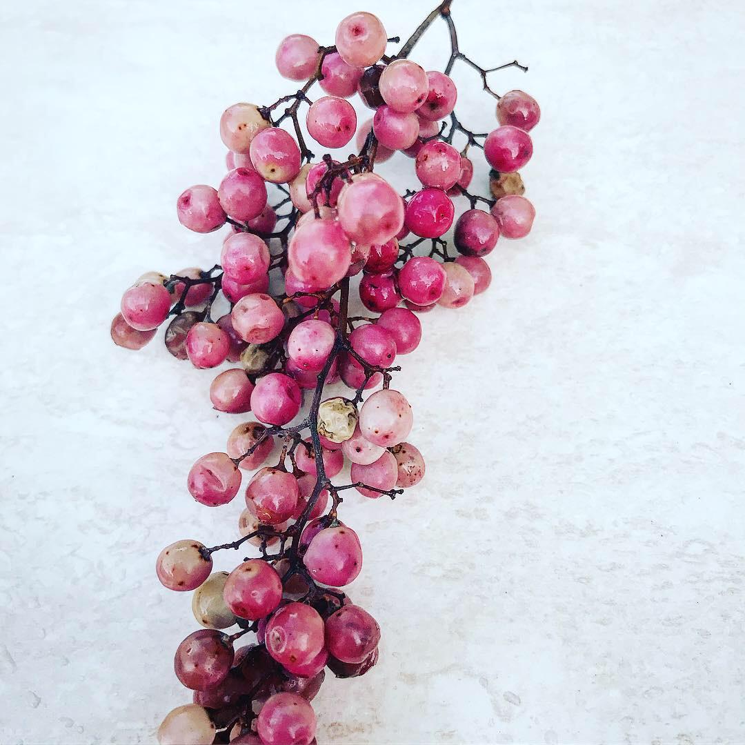 Färsk rosépeppar, direkt från trädet. Eller faktiskt från gatan nedanför trädet.