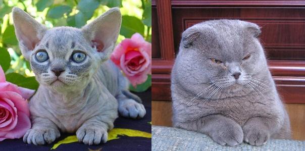 أغرب انواع القطط المرعبة في العالم بالصور