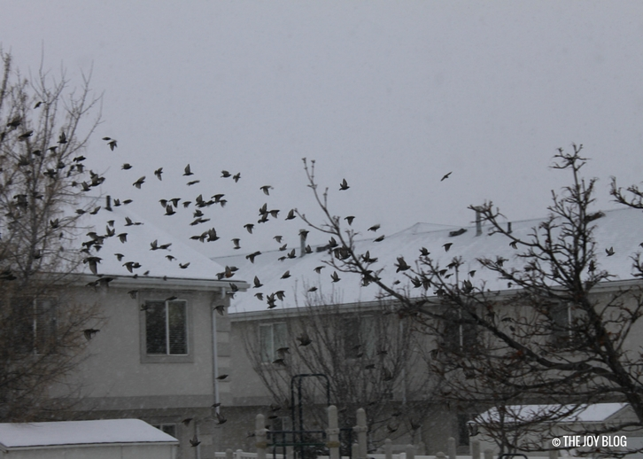 Flocks of robins fly away. // The Red Cat & The Red Chested Robins | WWW.THEJOYBLOG.NET
