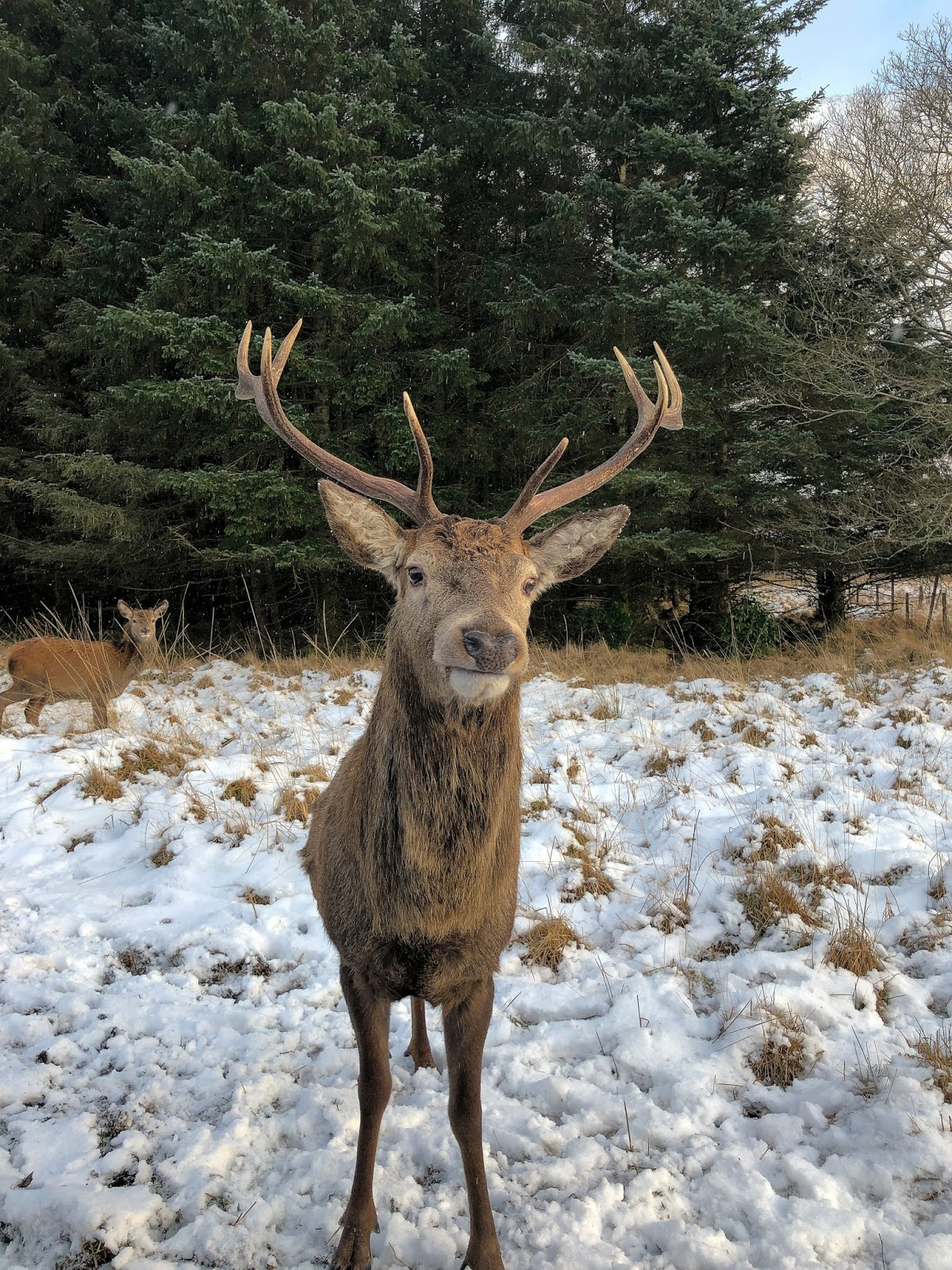 wild deer scotland