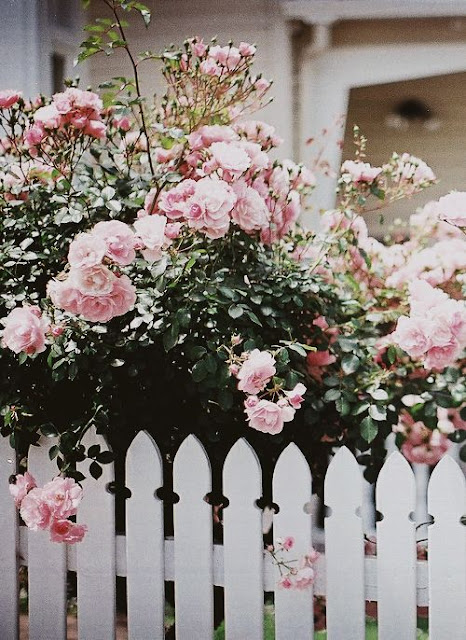 Perfect Nature  Pink Roses {Cool Chic Style Fashion}