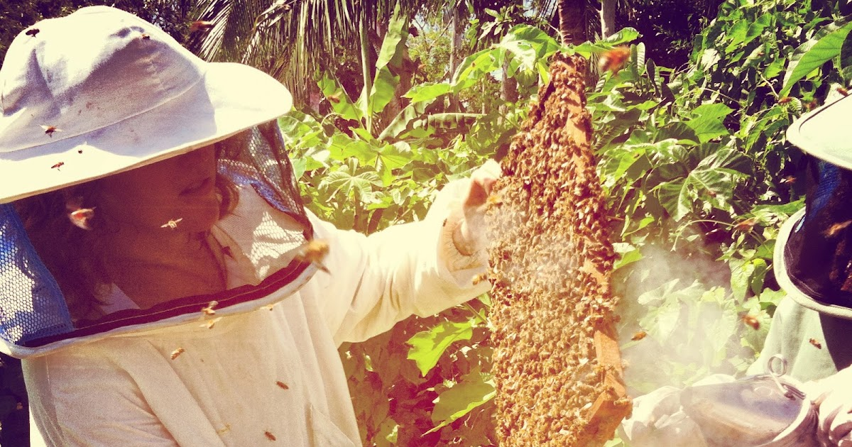 brown s downtown bees top bar hives economically sustainable
