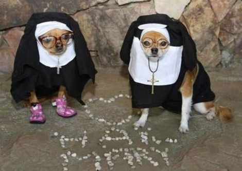 Animals Wearing Halloween Costume Elite Funny