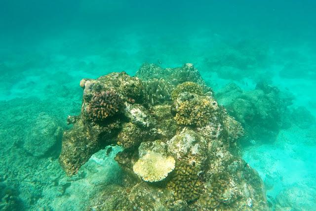 Peces y corales en las costas de Gili Trawangan