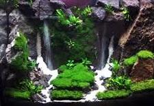 Cara Membuat Miniatur Air Terjun Berada Dalam Aquarium Membuat Miniatur
