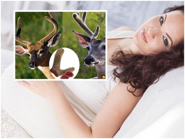 Sử dụng nhung hươu cho phụ nữ có thai an toàn