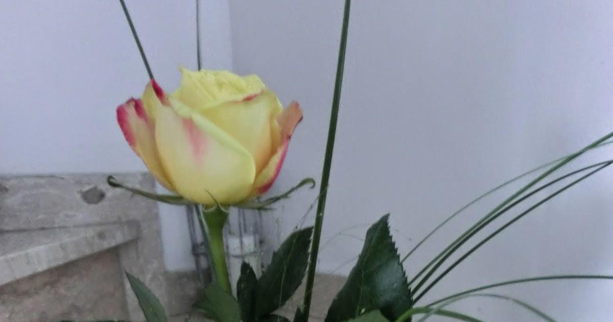 Willkommen Bei Marga Muttertag 2014