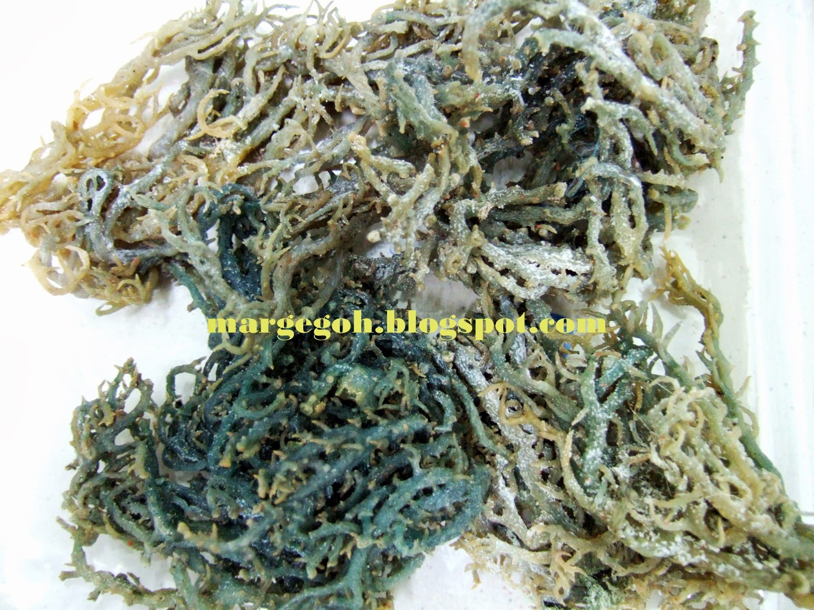 I Love My Style: Seaweed (Eucheuma Cottonii) and Its Benefits