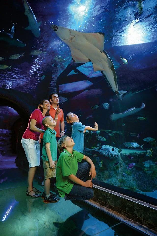 Coupon Savvy Sarah: SEA LIFE Michigan Family 4-Pack Prize ...