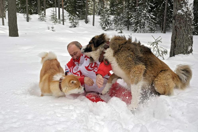 Bạn có biết chó thích chơi trò chơi gì nhất không?