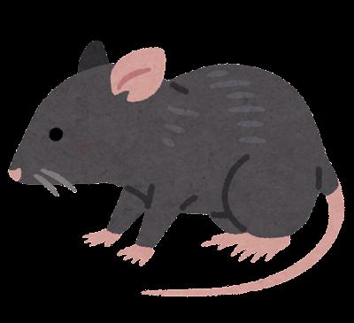 ドブネズミ・ラットのイラスト(黒)