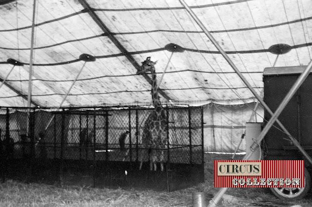 le zoo du Cirque Ringling Bros and Barnum & Bailey circus 1950