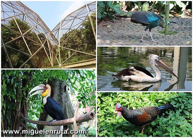 Aves-Taman-Mini-Yakarta