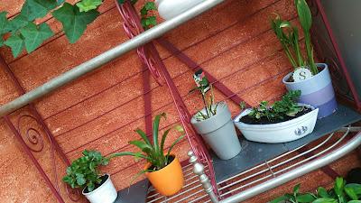 etagere-metal-plantes-vertes