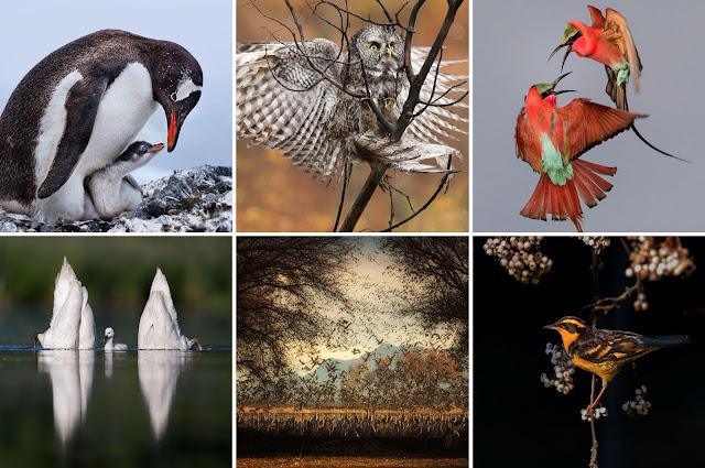 http://www.audubon.org/magazine/summer-2017/the-2017-audubon-photography-awards-winners